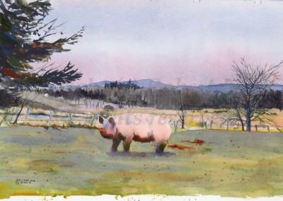 Lynkholm Pig Janessa | Copyright Robert Lynk